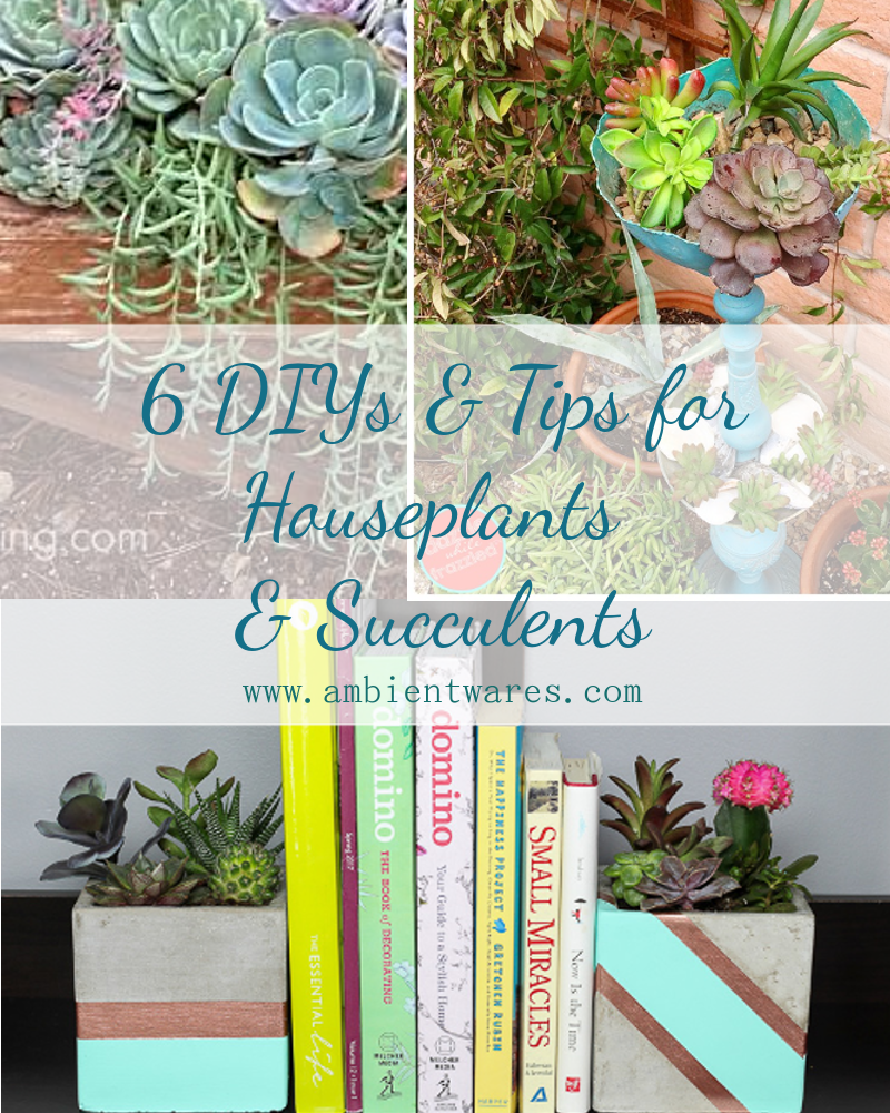 6 DIYs and Tips for Houseplants and Succulents