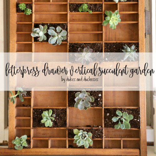 Letterpress Drawer Succulent Planter